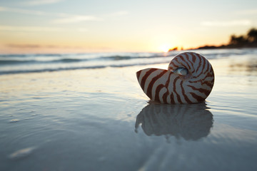 nautilus shell in the sea , sunrise, dark light