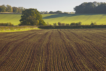 A recently ploughed field near to Naunton in the Cotswolds.