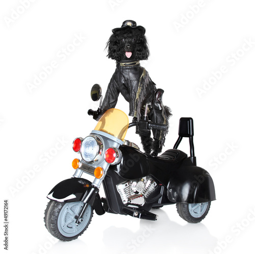Dog riding on a motorcycle