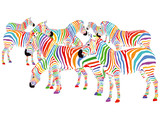 Fototapety Farbenfrohe Zebras