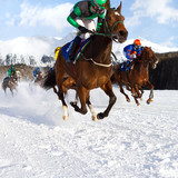 race horses in the snow