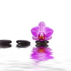 orquidea, agua, piedras, equilibrio