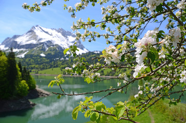 Spring in Switzerland