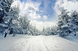 Fototapety winter scene: road and forest with hoar-frost on trees