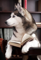 dog with open book on table