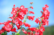 Snapdragon Flower on blue sky