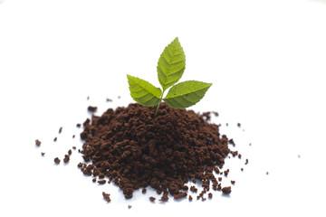 petite pousse de plante verte