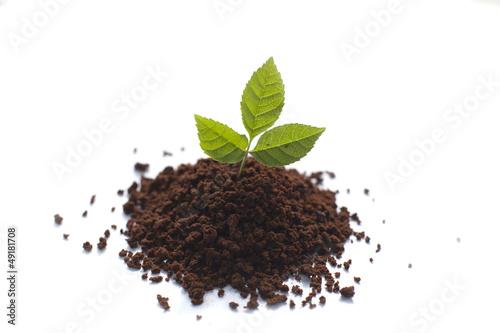 petite pousse de plante verte de auryndrikson photo libre de droits 49181708 sur. Black Bedroom Furniture Sets. Home Design Ideas