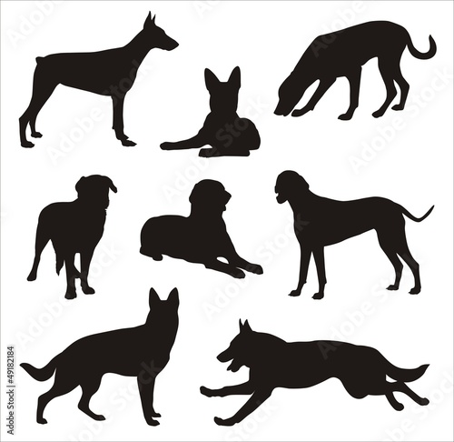 Dogs silhouette 2