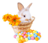 Cute bunny in a basket with flowers and colorful decorations