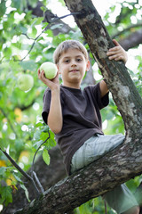 Child picking apples in a tree
