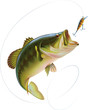 Largemouth Bass - 49188757