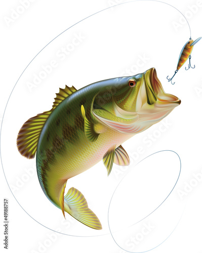 Fototapeta Largemouth Bass