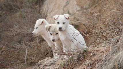 minik köpekler