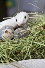 Texas rat snake in a bird's nest