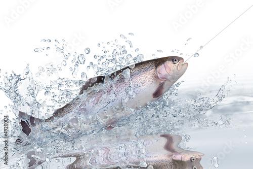 Fische 121