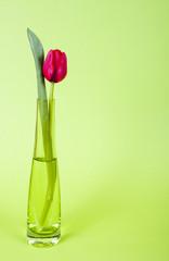 Rote Tulpe in der Vase