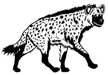 spotted hyena black white