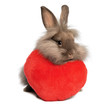 A valentine chocolate lionhead bunny rabbit with a red heart