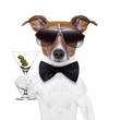 canvas print picture - martini dog