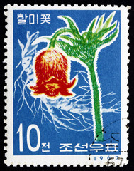 Postage stamp North Korea 1967 Korean Pasque Flower