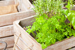 Herbs in wooden box