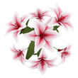 top view of bouquet of pink lilies isolated on white background