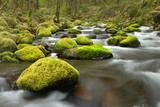 Fototapeta przepływające - woda - Rzeka