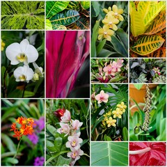 Collage of tropical flowers and plants