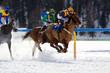 gara ippica sulla neve