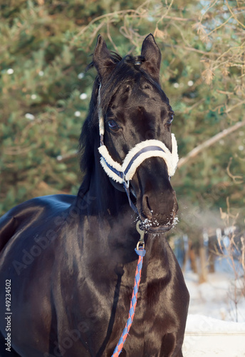 Fototapeten,pferd,tier,rasse,belle