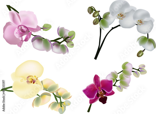 four color orchid branches on white
