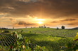 Chianti vineyard landscape in Tuscany, Italy - 49236361