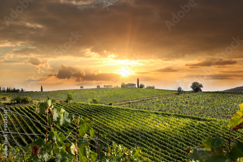 Poster Chianti vineyard landscape in Tuscany, Italy