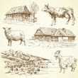 rural landscape, village, farm animals
