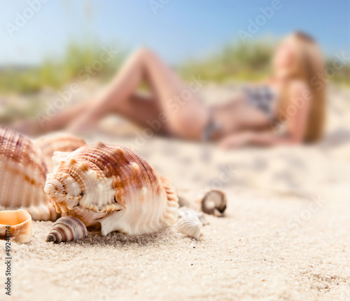 shells on sea sand