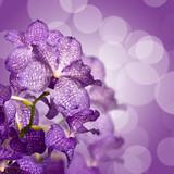 Orchidée Vanda, carré fond violet