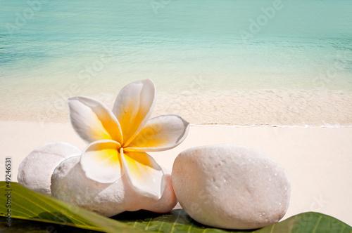Galets, frangipanier, fond mer et plage