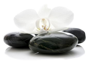 Orchid flower on zen stones