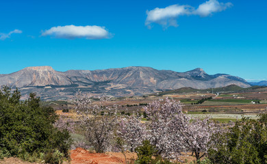 View of Almond Blossom fields, Velez Blanco, Almeria, Spain