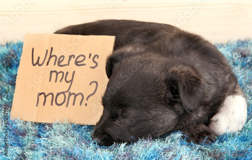 Cute puppy sleeping with sign
