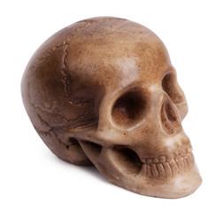 Plaster cast of a human skull