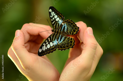 Schmetterling in der Hand