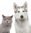 Cat and dog. Closeup portrait
