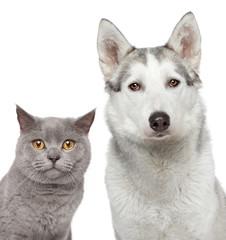 Cat and dog. Closeup portrait