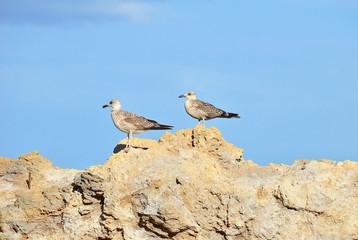 Big seagull on rock in Odessa, Ukraine