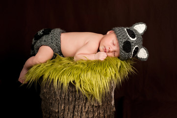 Sleeping Newborn Baby Boy Wearing a Raccoon Costume