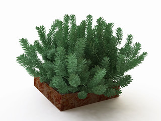 Evergreen House Plant in Stone Pot
