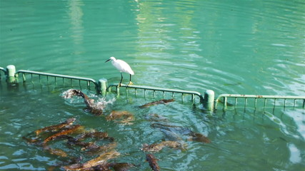 Heron sitting on fence on Jordan River in Israel