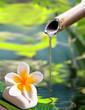 Fontaine en bambou, fleur de frangipanier - 49268197